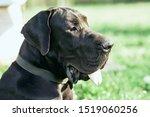 Pets Dog Black Wool Collar...