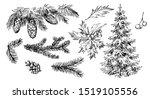 winter plants  holly  cones ...   Shutterstock .eps vector #1519105556