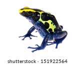 Blue Dyeing Dart Frog...