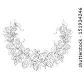 hop garland on a white...   Shutterstock . vector #151934246