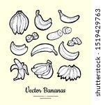 bananas vector isolated. fruits ... | Shutterstock .eps vector #1519429763