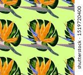 royal strelitzia. tropical... | Shutterstock .eps vector #1519720400