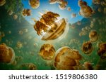 Jellyfish lake in palau  full...