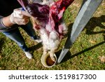Stock photo the slaughter of the animal hare animal slaughter the death of the hare rabbit meat 1519817300