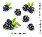 Blackberry. blackberries...