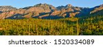 Bear Canyon Mountain And Cacti...