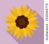 botany sunflower icon. flat... | Shutterstock .eps vector #1520343773
