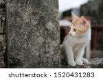 Stock photo cute little red kitten playing outdoor portrait of red kitten in ruin looking interesting tabby 1520431283