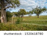 Tree Plot With Old Stock Of...