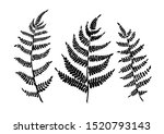 fern leaves are a simple vector ... | Shutterstock .eps vector #1520793143