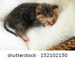 Stock photo newborn kitten 152102150