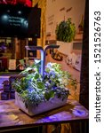Small photo of Berlin, Germany – September 6th, 2019: Veritable self-sufficient indoor garden at IFA 2019