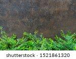 green bush in front of dark... | Shutterstock . vector #1521861320