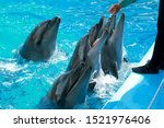 Cute beautiful playful dolphins in the dolphinarium