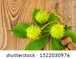 Branch Of Green Chestnut With...