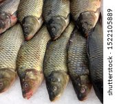 Macro Photo Fresh Fish Carp....