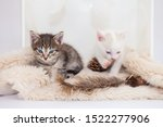 Stock photo kittens sit on a fluffy rug tabby kitten playing with white domestic pets close up 1522277906