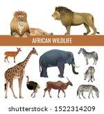 African Wildlife  Lions  Zebra...