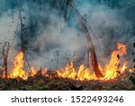 Small photo of Amazon rain forest fire disaster is burning at a rate scientists have never seen before.