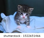 Stock photo a baby kitten sitting on a white cloth in a box a rescued kitten 1522651466