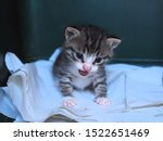 Stock photo a baby kitten sitting on a white cloth in a box a rescued kitten 1522651469