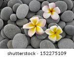 Three Frangipani And Gray Stones