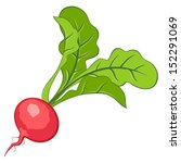 radish | Shutterstock .eps vector #152291069