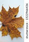 autumn leaf close up texture | Shutterstock . vector #1522966436