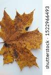 autumn leaf close up texture | Shutterstock . vector #1522966493