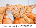 Yellow Kitten And Mom  Isolated