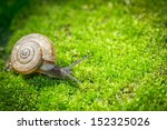 Snail Crawling On Moss In...