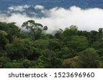 The Amazon Rainforest With...