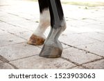 Small photo of horse Radiography of leg and hoof by medical check of vetenarian