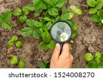 a hand holds a magnifier and... | Shutterstock . vector #1524008270