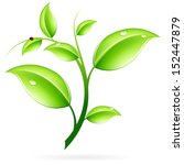 green sprout with leaves and... | Shutterstock . vector #152447879