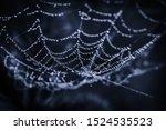 Cobwebs In The Dew On Black...