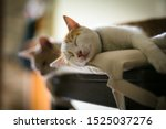 Stock photo nice little kittens sleep at home white and red italian cats 1525037276