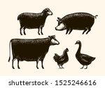 Farm Animals Sketch. Farming...