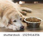 Sad Golden Retriever Dog Get...