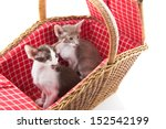 little tabby cat hiding itself... | Shutterstock . vector #152542199