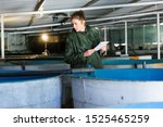 Small photo of Woman in working clothes controlling fish growth in trout hatchery incubator