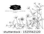 sketch floral botany collection.... | Shutterstock .eps vector #1525562120