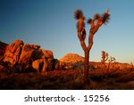 joshua tree national park | Shutterstock . vector #15256