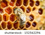 Bees In A Beehive On Honeycomb