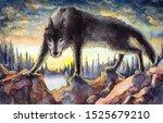 Aggressive Black Wolf...