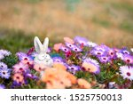 Stock photo garden toy in flowers multi colored daisies white hare hiding in flowers copy space card with a 1525750013