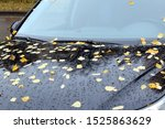 Yellow Leaves Fell On The Hood...