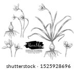 sketch floral herbal set. rain... | Shutterstock .eps vector #1525928696