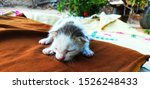 Stock photo cat feeding her kittens and a cute kitten sleeping on the bed 1526248433