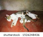 Stock photo cat feeding her kittens and a cute kitten sleeping on the bed 1526248436